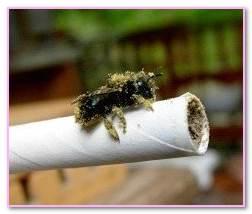 Masonry Bees Removal