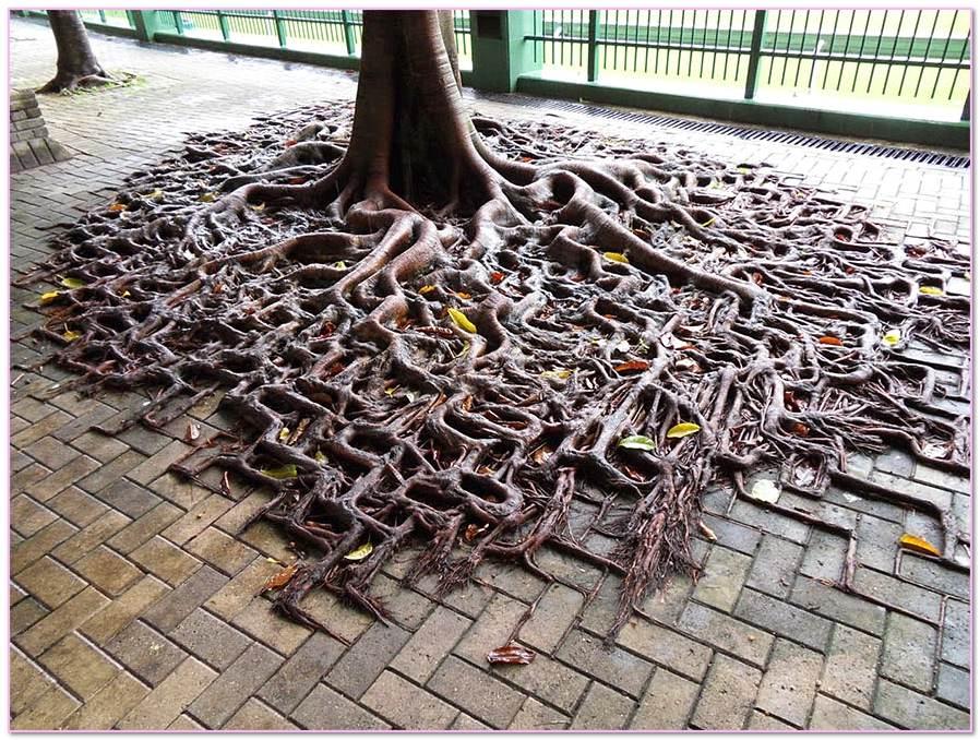 Roots Of Masonry
