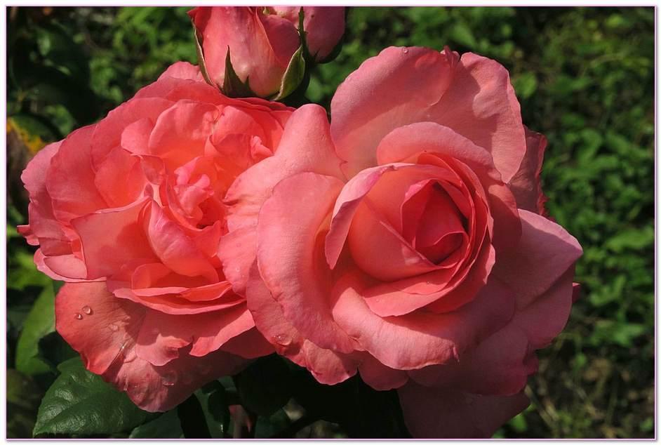Dom Rose Masonry
