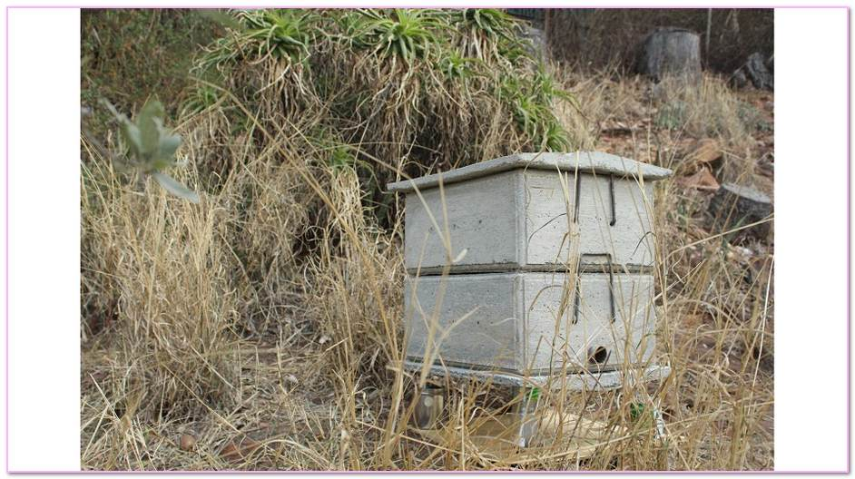 What Is Significance Of The Beehive In Masonry